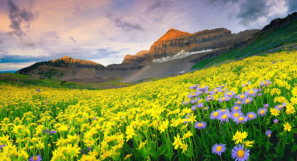 valley-of-flowers-trek-india